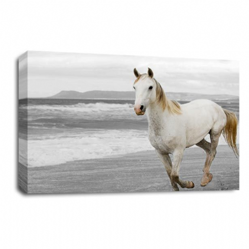Running Free White Pony Horse Canvas Wall Art Picture Print